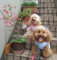 春の散歩へ4