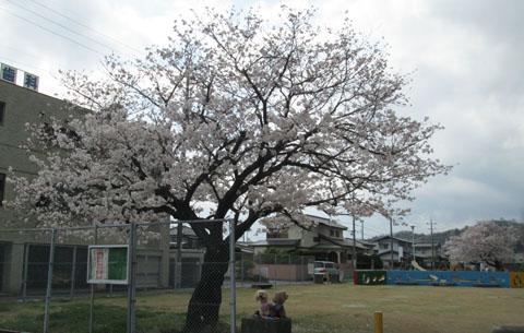 '15 桜とわんこ