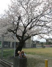 '15 桜とわんこ1