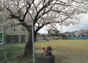 '15 桜とわんこ2