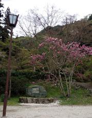 おはんの碑と木蓮