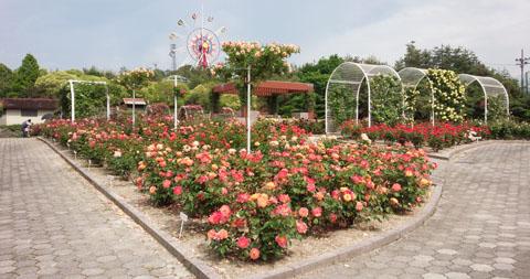 今日のピックアップ 薔薇園