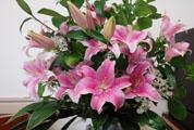 今日の癒やしのお花