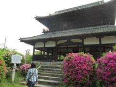 吉香公園でお花見4