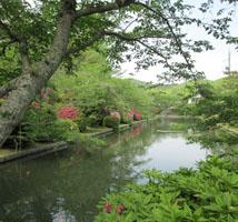 吉香公園でお花見6