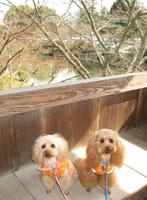 去年の吉香公園2
