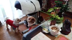 ばぁばとお昼飯2