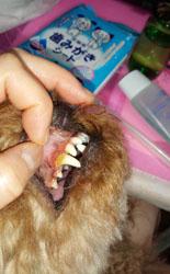 Rくんの歯磨き2