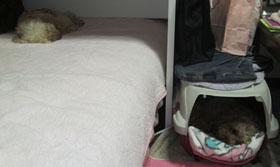 Roseの寝待ちの寝場所にNon2