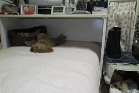 Roseの寝待ちの寝場所5