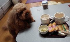 ガルルなお茶時間1