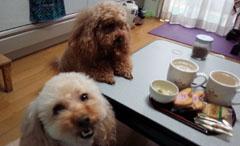 ガルルなお茶時間2