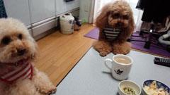 午前のお茶の部2