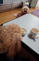 またお茶時間か?1