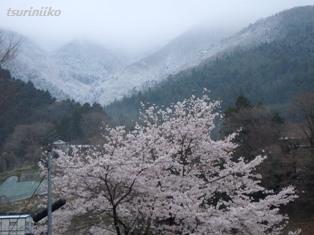 01 20150409 道志の桜と山