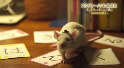 TBSドラマ「アルジャーノンに花束を」の番宣動画に「は・ん・ぐ・る」の文字。プロデューサーは韓哲1