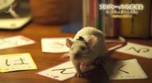 TBS 山下智久主演「アルジャーノンに花束を」 第8話の視聴率7.8%