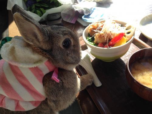 桜姫鶏の塩麹漬け油淋鶏丼?