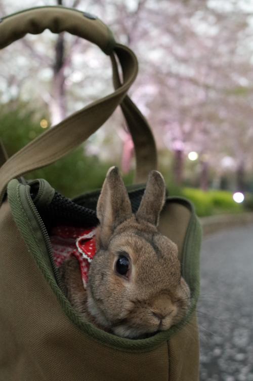 桜を撮るんじゃないの?