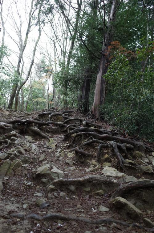 この道、登るの?