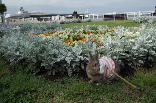 お花がいっぱい!