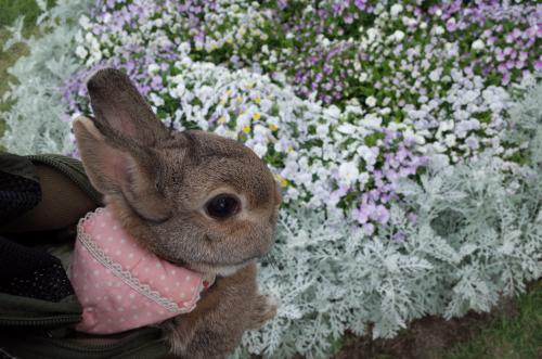 春のお花も終わりだね~