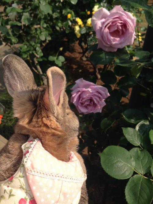 一番好きなバラだね♪