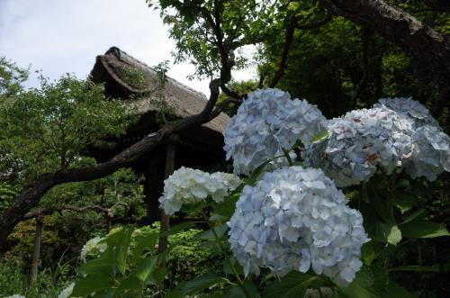 東慶寺に入るよ♪