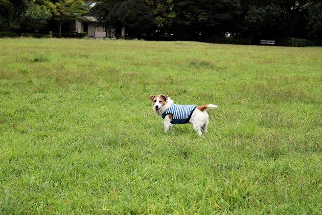 2015長岡公園0665