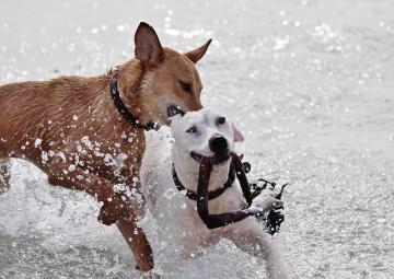 dog-708382_640_convert_20150523032205.jpg