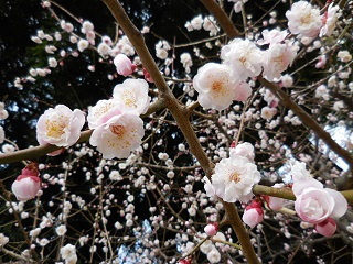 miyoshino2.jpg