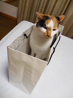 shogatsucat1.jpg