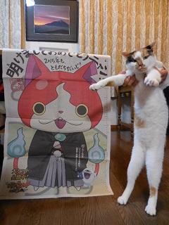 shogatsucat4.jpg