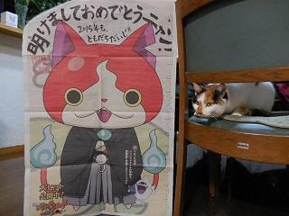 shogatsucat5.jpg