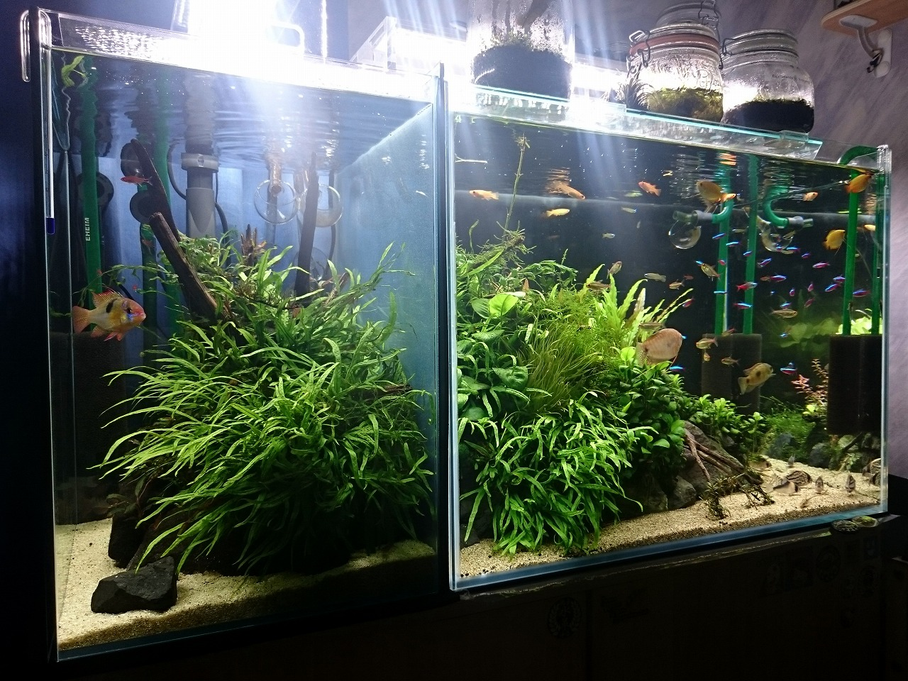 20150427_AquariumTanks.jpg