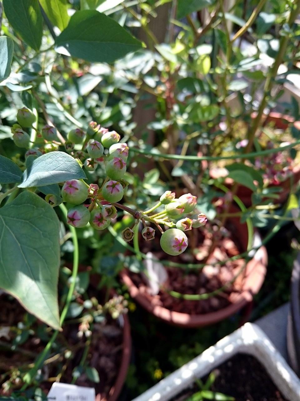 20150523-14_Blueberry-02.jpg