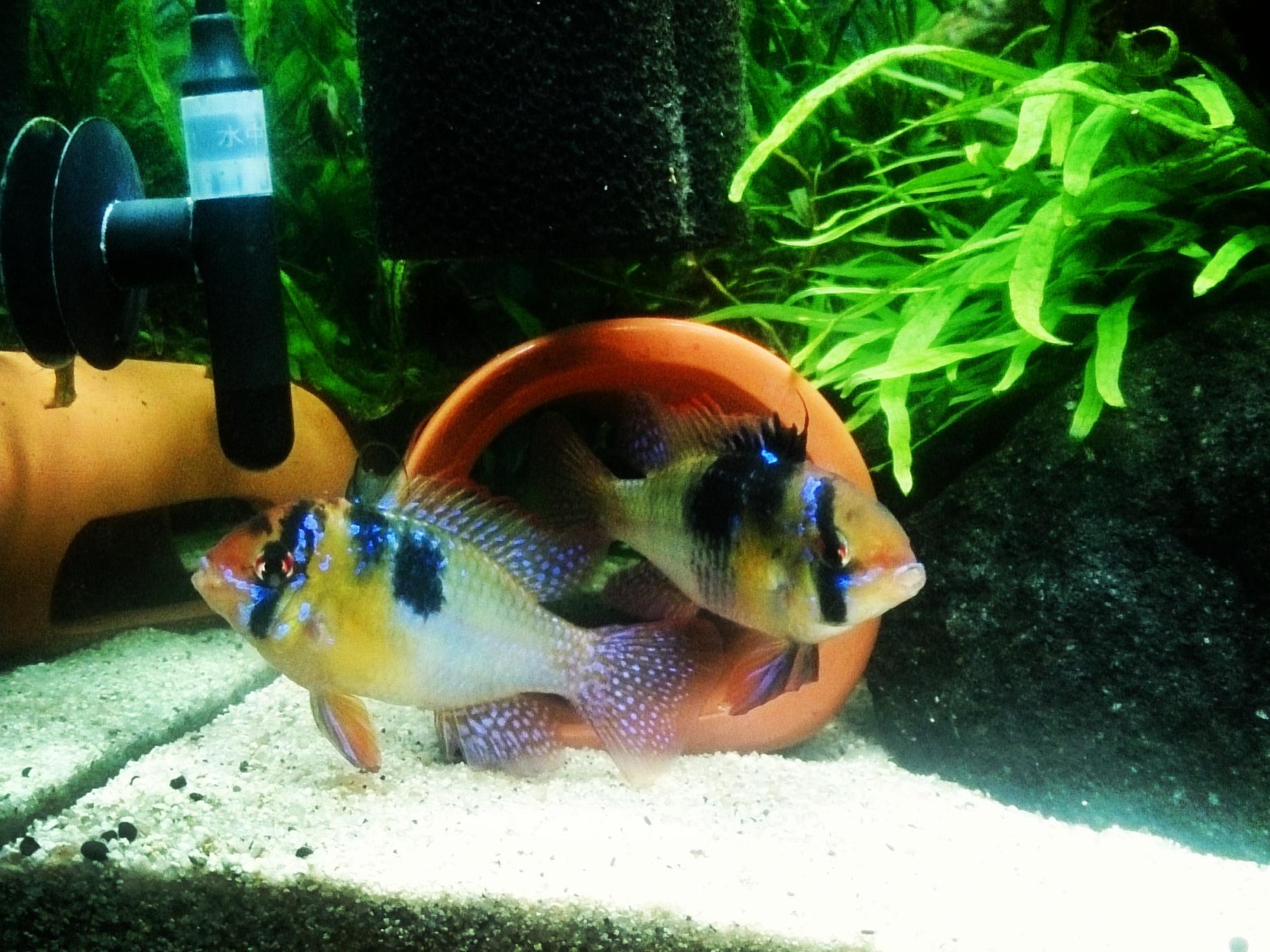 Aquarium_20150311-02.jpg