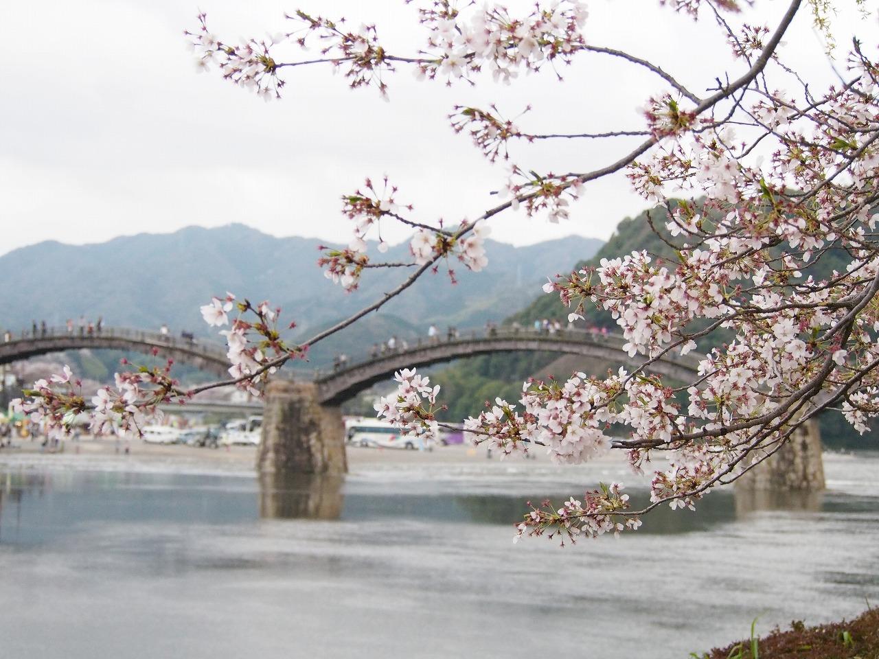 Kintaikyo_20150405-01.jpg