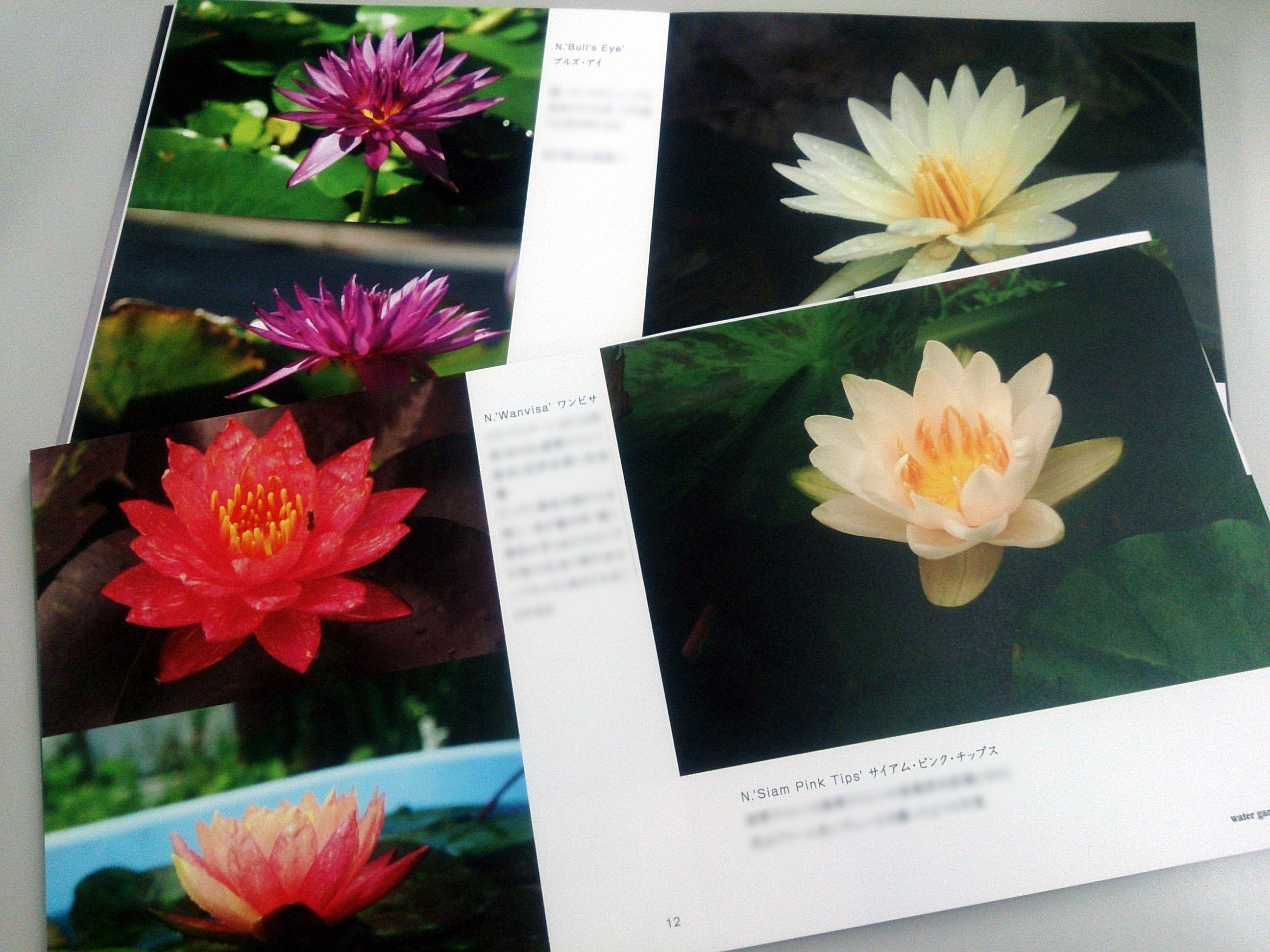 PhotoBook-Watergarden2014_20150312-03.jpg