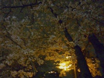 夜桜花見会3