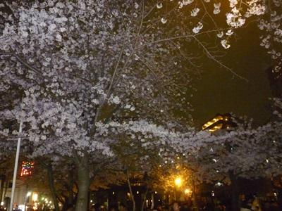 夜桜花見会5