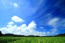 ・夏の風景3