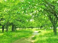 ・新緑と道
