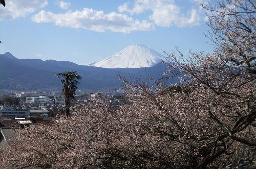 梅とシュロと富士山