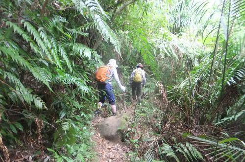 ジャングルを進
