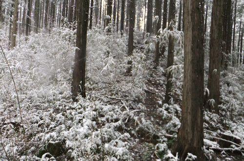 深くなる雪