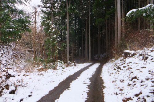 長い林道下り