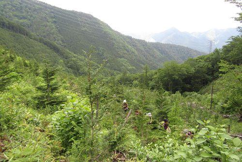 植林地の登り