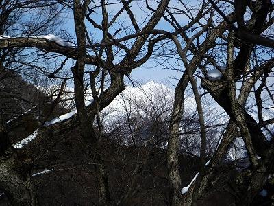 樹がじゃま
