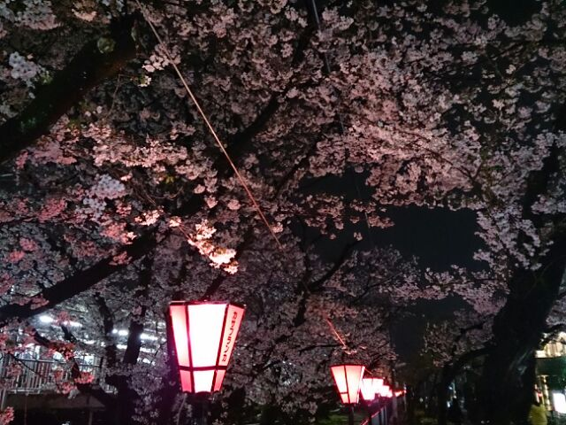 2015夜桜